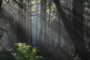 woods1024