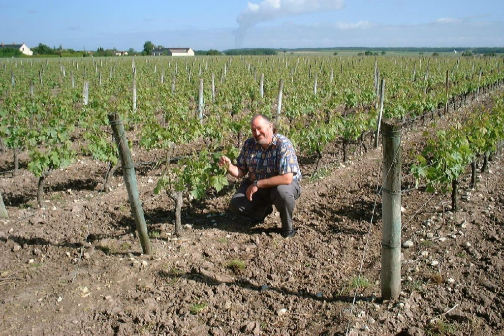 vineyard loire steve 1
